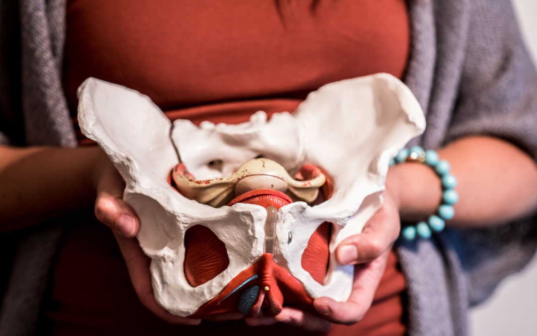 Pelvic Anatomy: Getting To Know Your Pelvis and Your Pelvic Floor